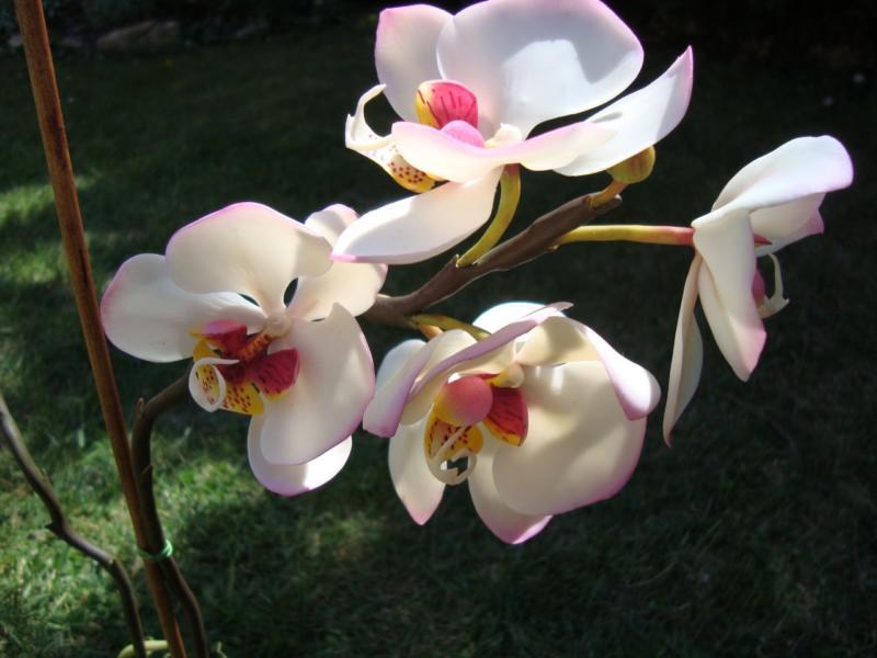 Kaspós virágok